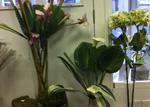 Berwick Florist, glassware